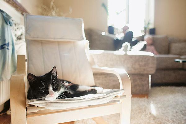 Katze auf Stuhl